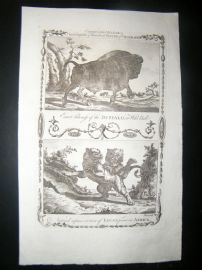 Millar 1782 Folio Antique Print. Buffalo & Lions of Africa